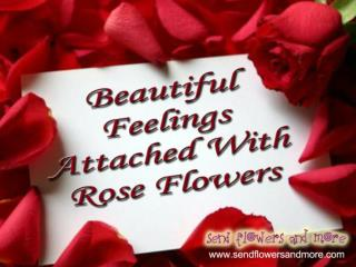 Rose Flower: Spread Feelings of Love