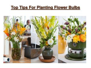 Top Tips For Planting Your Favorite Bulbs
