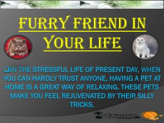 Furry Friend In Your Life