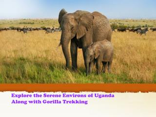 Explore the Serene Environs of Uganda Along with Gorilla Tre