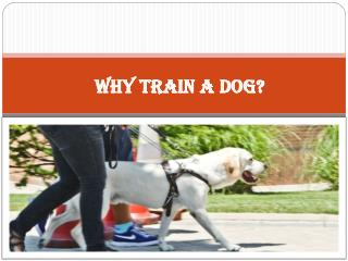 Why Train A Dog?