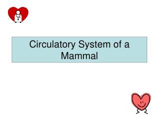 Circulatory System of a Mammal