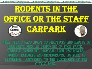 Rodents in the Office or the Staff Carpark