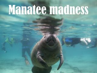 Manatee madness