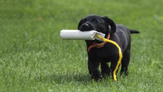 Training A Puppy Is Easier Than Training an Adult or Adolesc