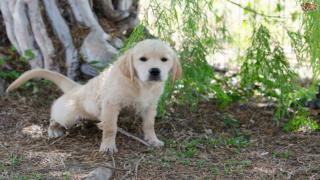 Training Your Puppy – Eliminating Biting Behaviors