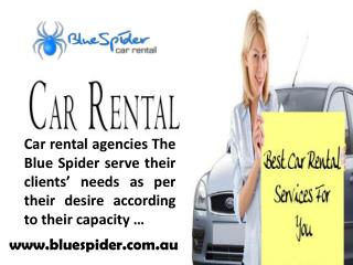 Blue Spider- Makes Your Trip Enjoyable and Relaxing