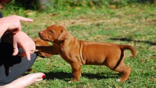 Dog Training - Training New Puppy Tips