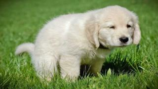 Training your puppy – start by winning his respect and confi