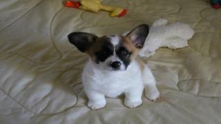 Training your new puppy – eliminating bad habits