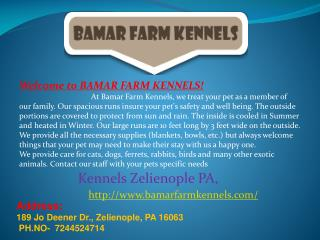 Kennels, Dog, Cat Boarding and Pet Grooming Zelienople PA