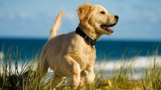 Dog Training - Obedience training and your dog