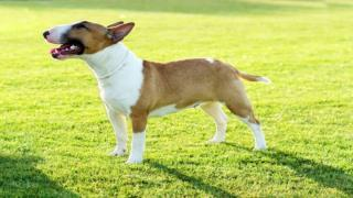 Dog Training - Training the dog to come when it is called