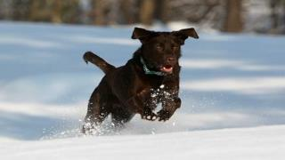Dog training – keeping your dog motivated