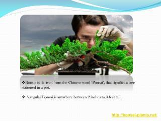 Basic Information about Bonsai