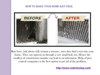 HOW TO MAKE YOUR HOME RAT FREE