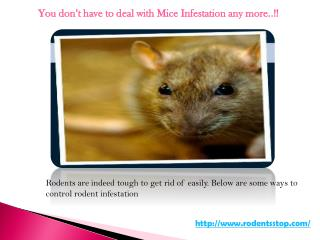 You don't have to deal with Mice Infestation any more..!!