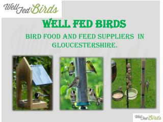 Top 5 tips to choose the right bird feeder