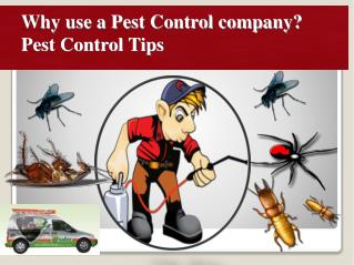 Why use a Pest Control company? Pest Control Tips