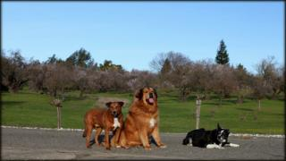 Dog training - Taking your dog training off leash