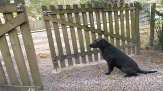 Dog training - Training your dog not to fear loud noises