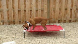 Dog training - Dealing with problem puppy behaviors