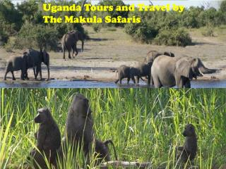 Uganda Tours and Travel by The Makula Safaris