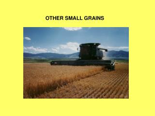 OTHER SMALL GRAINS