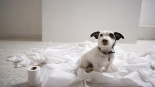 Dog Puppy Training