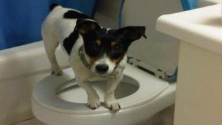 Dog Toilet Training