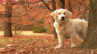 Dog Training Online