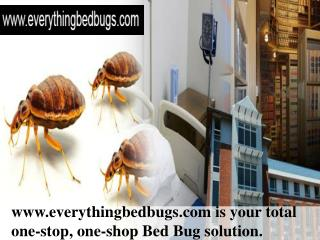 Everything Bed Bugs