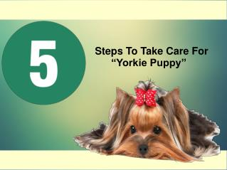 5 Steps To Take Care For Yorkie Puppy