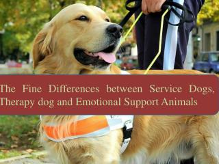 The Fine Differences between Service Dogs, Therapy dog