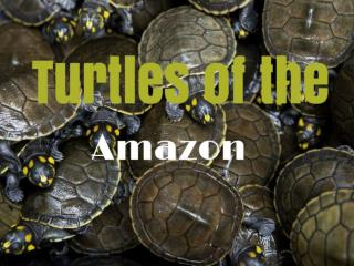 Turtles of the Amazon