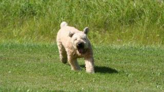 Dog Training Tips - Things I've