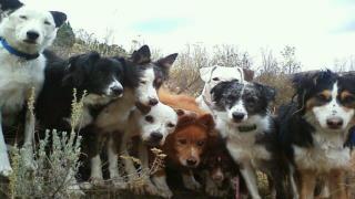 Home Dog Training