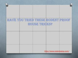 Have you tried these rodent proof house tricks?