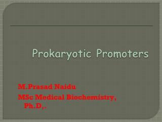 PROMOTER CHARACTERIZATION