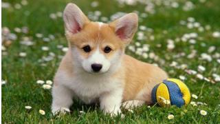 Puppy Love - Secrets to Professional Dog Training