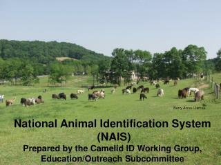 National Animal Identification System  NAIS Prepared by the Camelid ID Working Group, Education