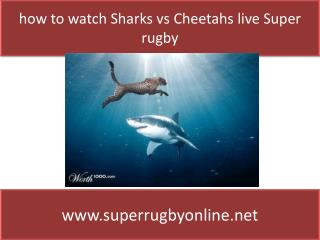 Sharks vs Cheetahs Live super rugby match sports Stream 2015