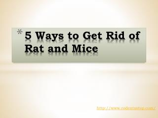 5 Ways to Get Rid of Rat and Mice
