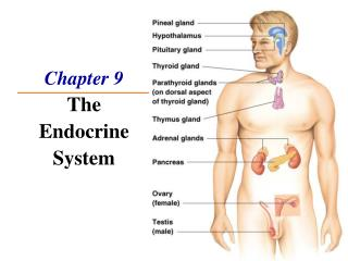 Chapter 9 The Endocrine System