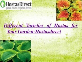 Different Varieties of Hostas for Your Garden- Hostasdirect