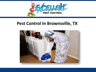 Pest Control In Brownsville, TX