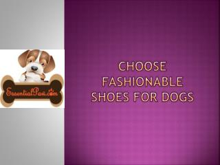 Choose fashionable shoes for dogs