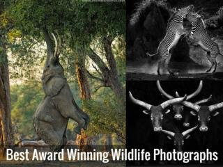 Best Award Winning Wildlife Photographs
