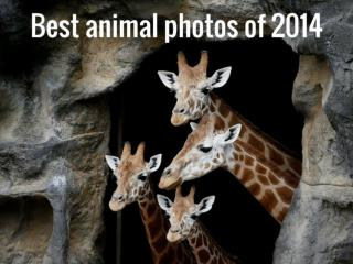 Best animal photos of 2014