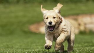 Training Your Dog using a PetSafe